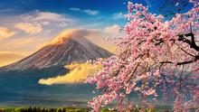 Fuji Mountain And Cherry Bloss...