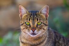 Closeup Beautiful Cat Portrait