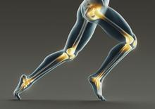 Human Legs And Bones, X Ray, 3...