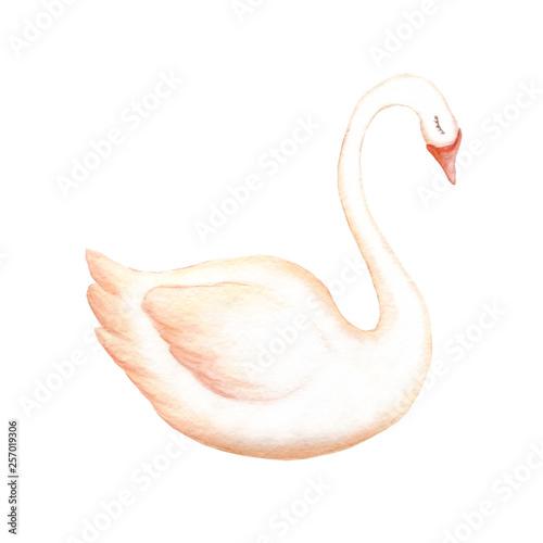 Stampa su Tela watercolor swan