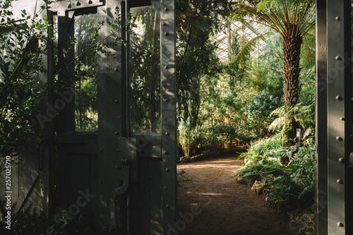Cuadros en Lienzo Horizontal photo of different palms in subtropical greenhouse, copy space/ footpath, exotical evergreen plants in the botanical garden, beautiful natural sunlight/ nature and ecology concept