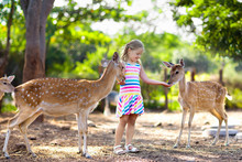 Child Feeding Wild Deer At Zoo...