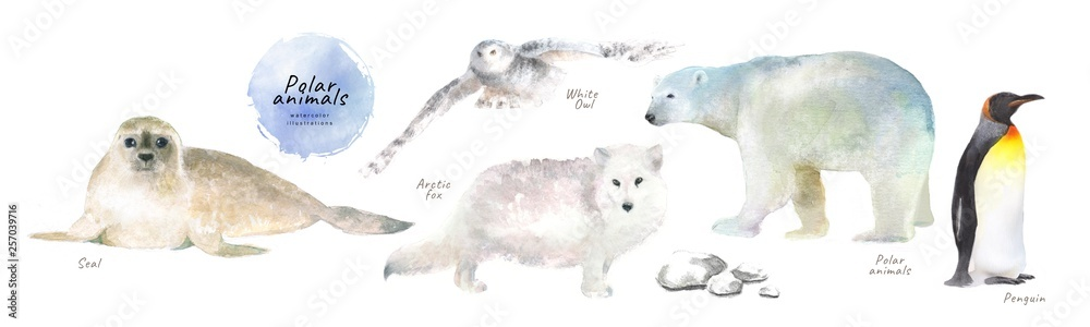 Fototapeta Watercolor illustrations of polar northern animals: seal, white owl, arctic fox, polar bear, penguin, isolated drawings by hand