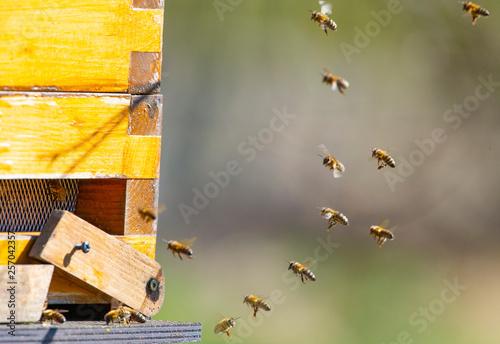 Recess Fitting Bee bee hive - bee breeding (Apis mellifera) close up
