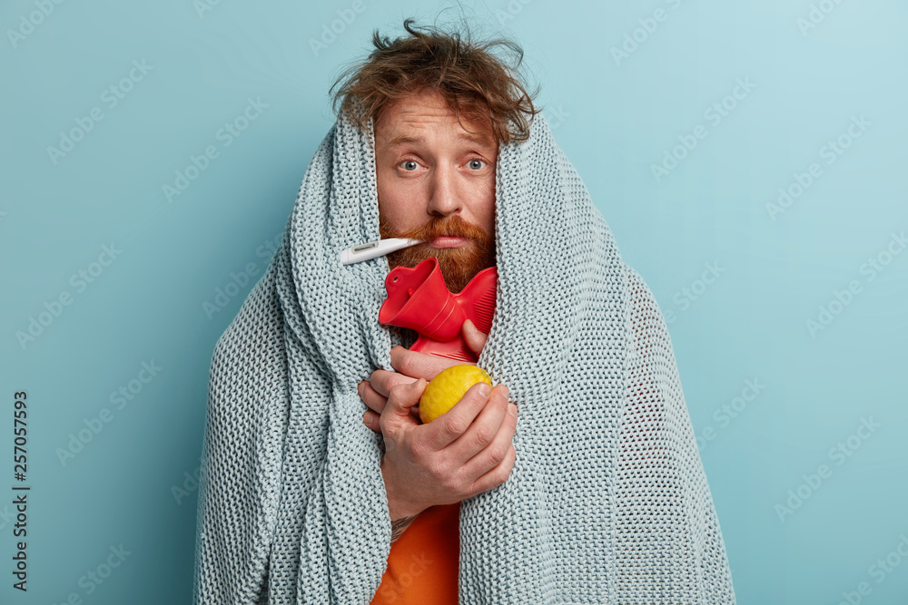 Fototapeta Health care concept. Stressful sick man measures temperature, eats lemon, wrapped in plaid, looks in displeasure, cures at home, suffers from cold, fever, has symptoms of flu, isolated on blue