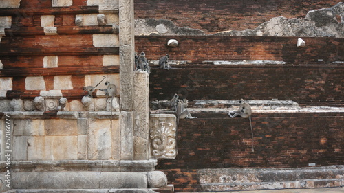 Photo  Gray langur, Semnopithecus entellus, monkey from Sacred City, walking on wall against red Jetavanaramaya stupa