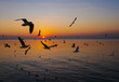 Seagulls are flying and the sunset in the sea.