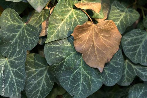 Valokuva  Fiori e foglie