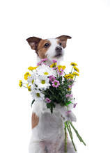 The Dog Holds A Bouquet Of Flo...