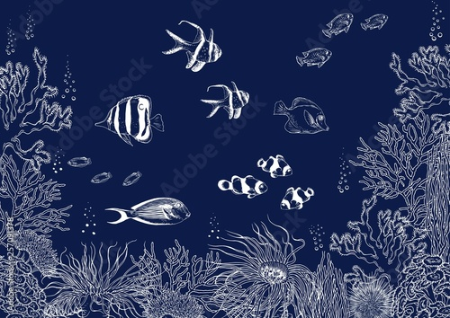 Photo Coral reef with tropical fishes, corals and seaweed