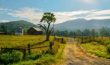Scenic Farm Land With Tree, Wo...