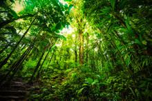 Tall Plants In Basse Terre Jungle In Guadeloupe