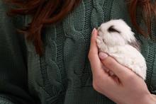Baby Bunny Rabbit Sleeping In Hands