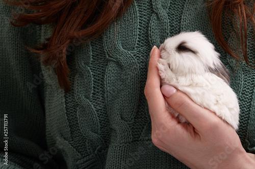 Photo Baby bunny rabbit sleeping in hands