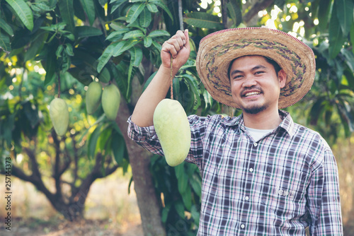 Young Asian farmer picking and show mango fruit in organic farm, Thailand Fototapete