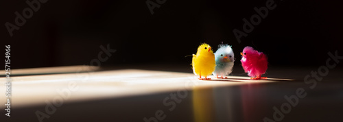 Fotografia  Küken im Sonnenschein besprechen Ostern