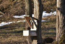 Fodder Rack For Deer With Food For Animal In Forest