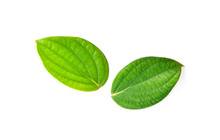 Peppercorn Leaves On White Background