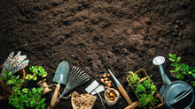 Gardening Tools And Seedlings ...