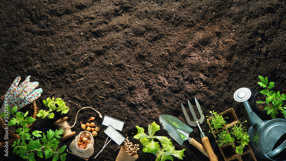 Fototapety, obrazy: Gardening tools and seedlings on soil