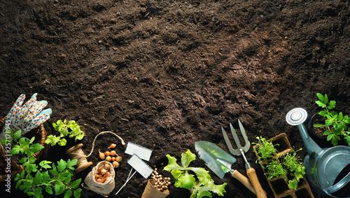 Poster Jardin Gardening tools and seedlings on soil