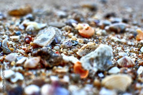Türaufkleber Makrofotografie sea shells on the beach