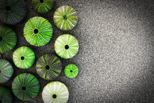 Green Sea Urchin Shells On Dark Sea Sand Background With Space For Text, Filtered Image
