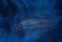 Ghostly Texture Of Forest Wood Covered With Blue Transparent Fog