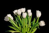 Fototapeta Tulipany - Bunch of white tulips isolated on black background