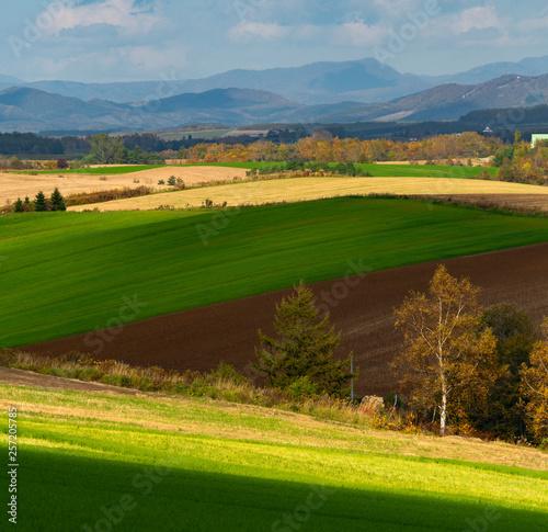 Foto op Plexiglas Groene うねる丘の秋 美しい美瑛の丘の秋と十勝連邦