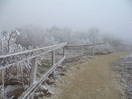 Poster Lichtroze Path with wodden fence on foggy winter day on Mashuk mountain, Pyatigorsk, Russia