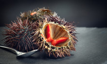 Sea Urchin Closeup. Fresh Sea Urchins Delicatessen Food. Traditional Mediterranean Food.