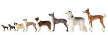 Group Of Various Size Dogs Ove...