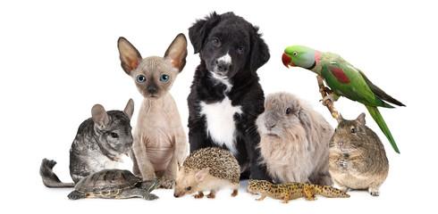 Duża grupa różnych zwierząt
