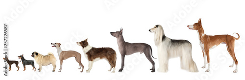 Group of various size dogs over white Wallpaper Mural