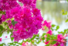 Beautiful And Charming Pink Bo...