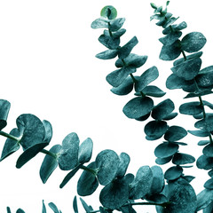 Foto-Lamellenvorhang