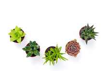 Little Potted Succulent Plants Isolated On White