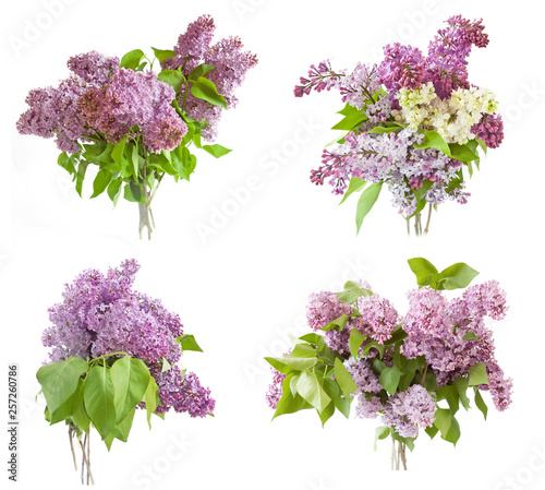 lilac flowers bunch set isolated on white background