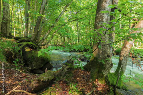 Fototapeta Bank Of The Forest River Beautiful Summer Nature Scenery Trees And Mossy Boulders On The Edge Of A Shore In Dappled Light Long Exposure
