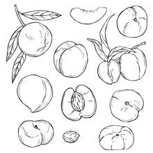 Hand Drawn Fruits On White Bac...