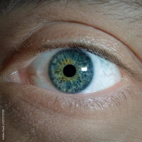 Foto op Aluminium Iris Iris detail