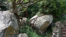 Trees On Stones And Rocks
