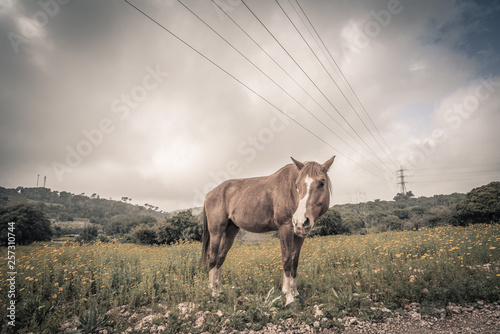 single brown horse gazing at the meadow