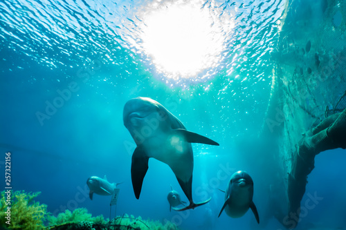 Spoed Foto op Canvas Dolfijn Dolphins swimming in the Red Sea, Eilat Israel