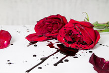 Dramatic Gothic Scene With Dark Red Roses With Blood Drops On White Background.