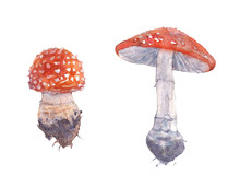 Fly Agaric. Watercolor Illustration.
