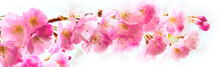 Panorama With Beautiful Pink F...