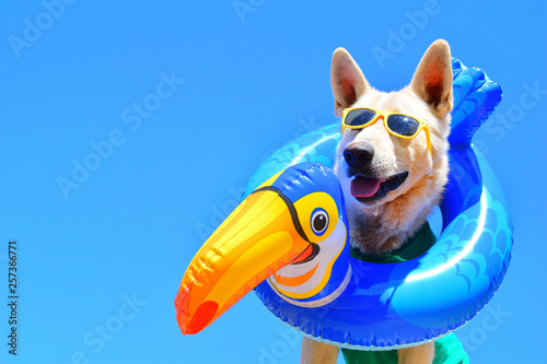 Fotomural  happy dog with sunglasses