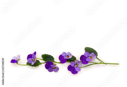 Fotografie, Obraz  Bouquet of beautiful flowers viola tricolor ( pansy ) on a white background with space for text